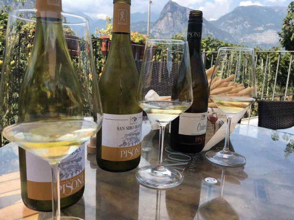 vini-bianchi-trentini