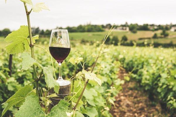 bicchiere_di_vino_natura