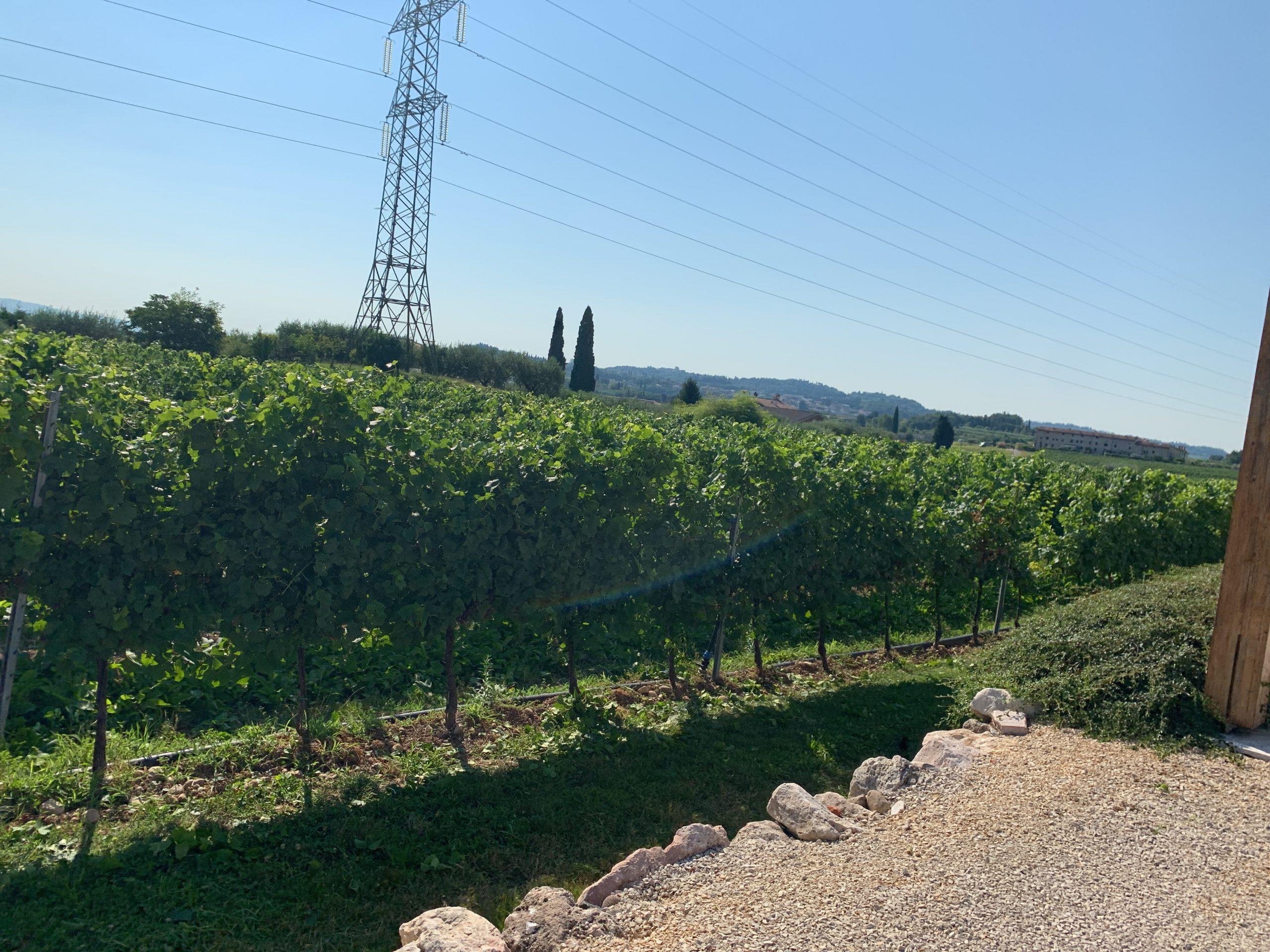 territorio_vitigni_benazzoli