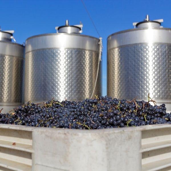 fermentazione_vino